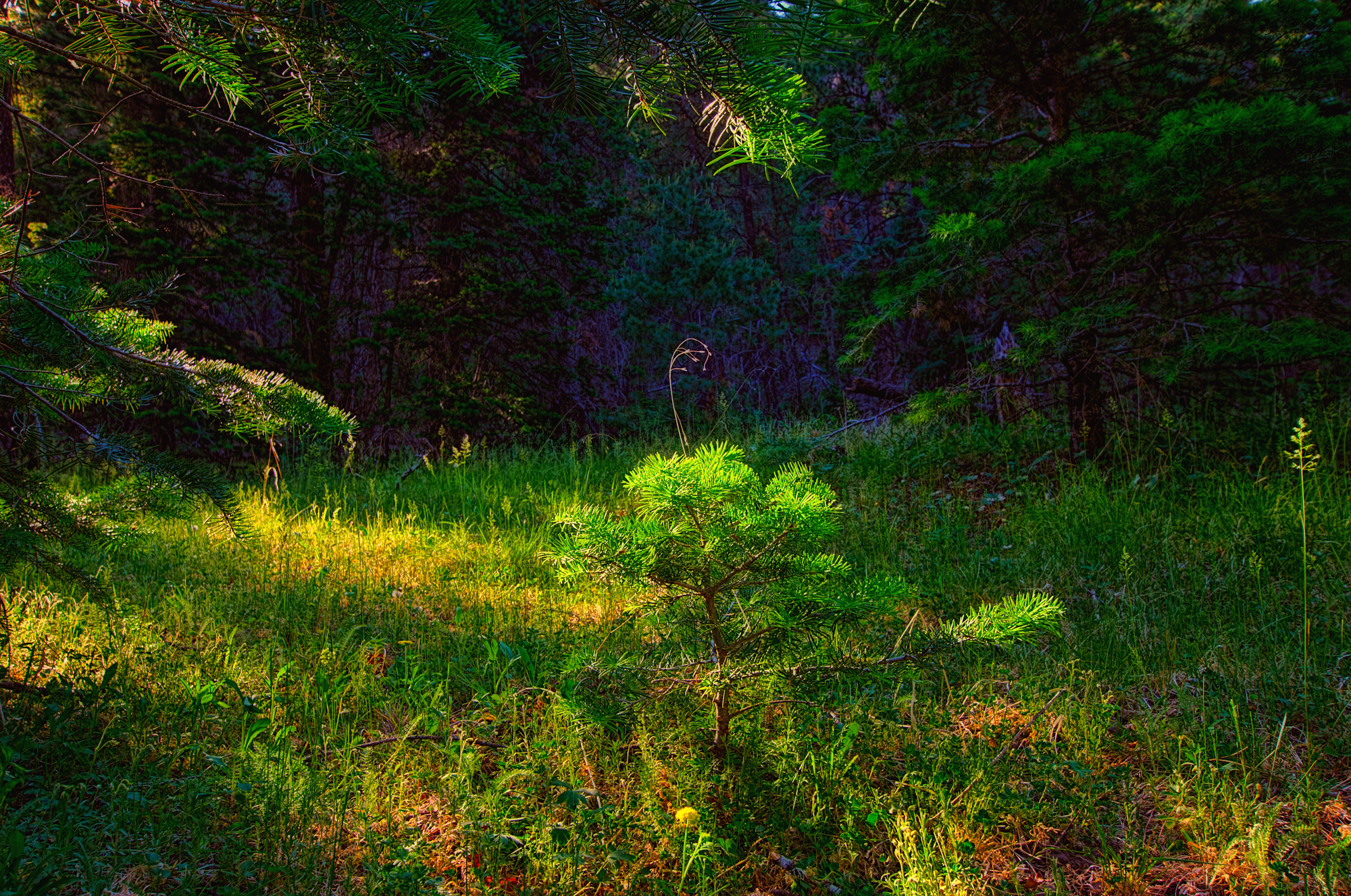 _DSC0138_39_40_41_42_43_44_tonemapped-Edit-Edit